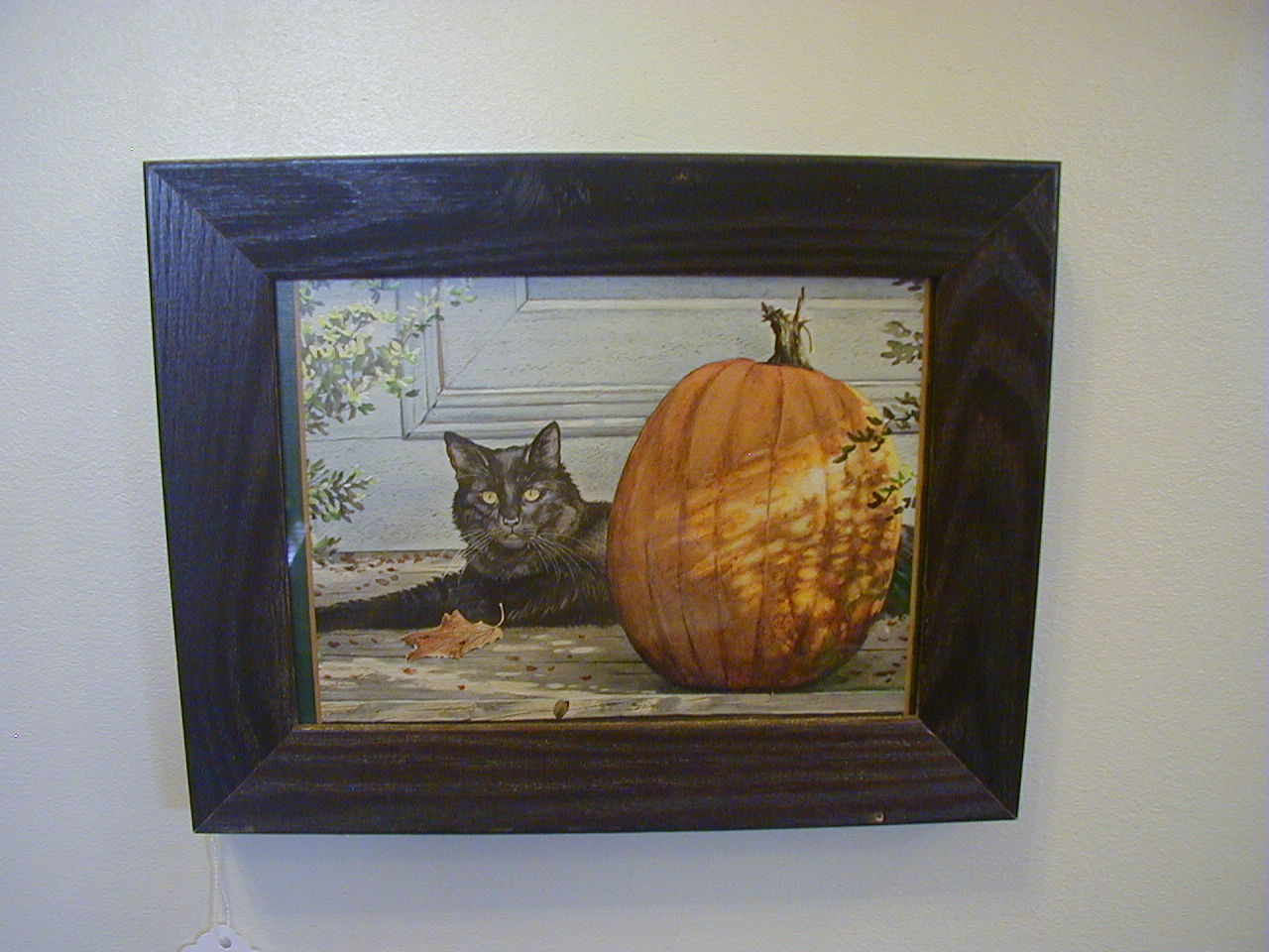 Fall Cat Piture Small